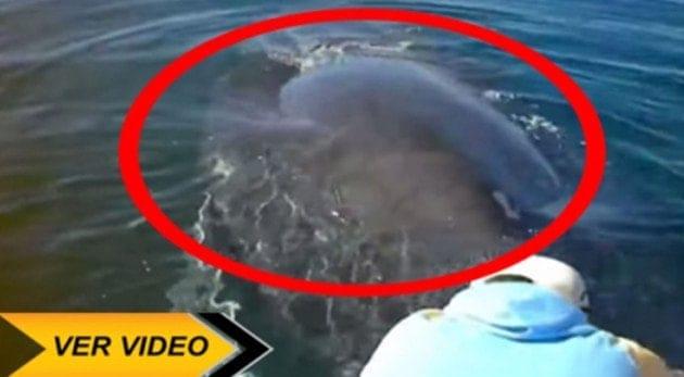 La Reacción De Esta Ballena Al Ser Liberada De Una Red De Pescador Que La Tenía Atrapada. ¡EMOCIONANTE!