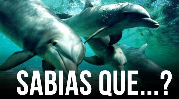 ¿Sabías que los delfines tienen la mejor memoria del mundo animal?