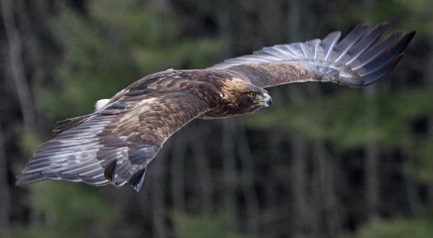¡Extiende tus alas!