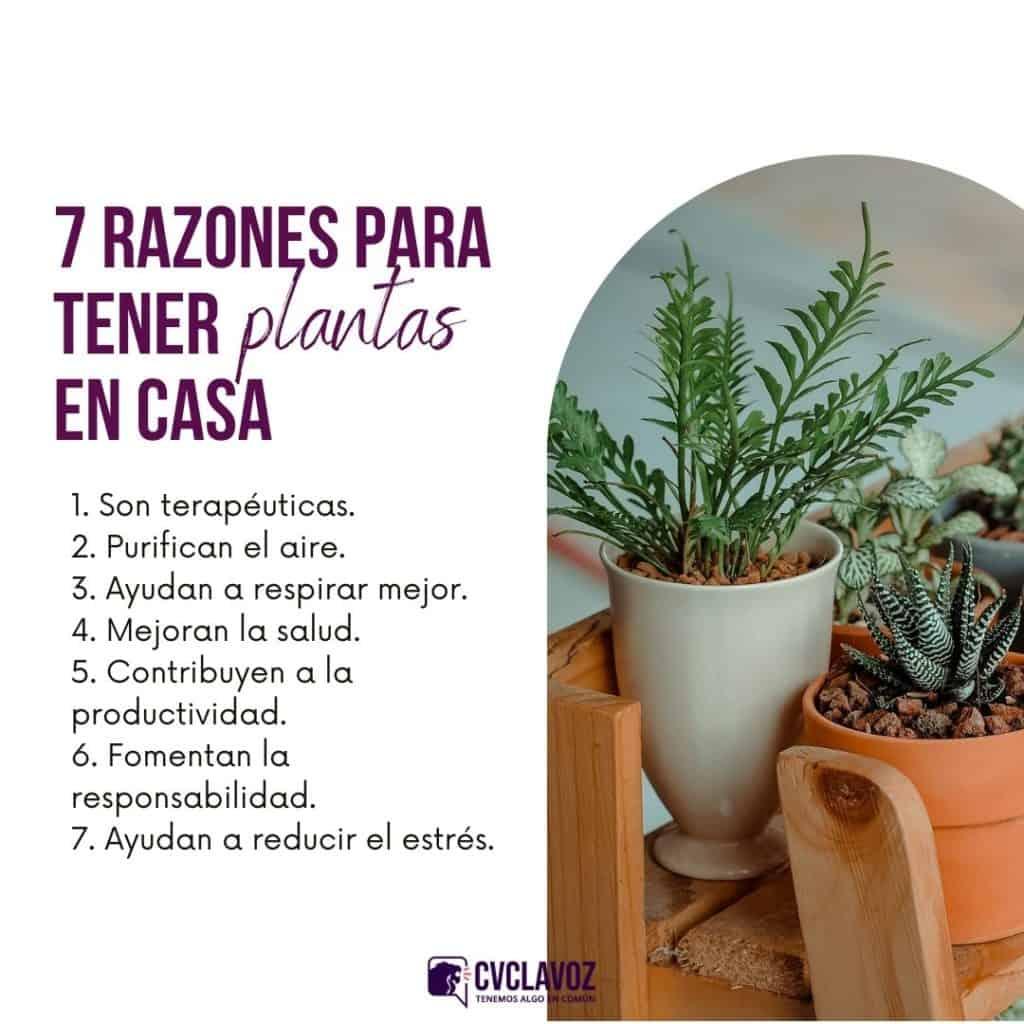 Por qué tener plantas en casa